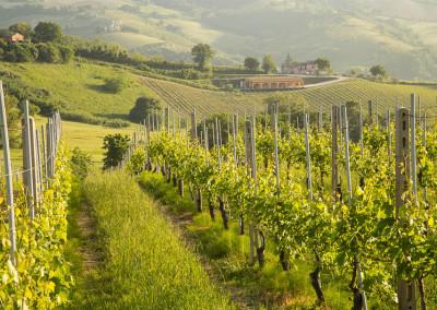 Bistro_CheStoria_Marche_Italy_rSJ-0288